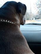 Boo in car