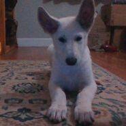 Pupper (2)