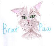 Briarpaw-cheetah