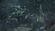 Forbidden Woods №9