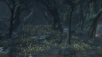Forbidden Woods №17