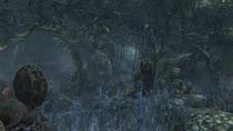 Forbidden Woods №12