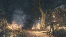 Forbidden Woods №19