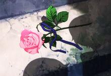 Hajis rose.jpg