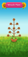 Miracle Plant tree withered