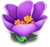 Flowerpurple8