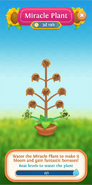 Miracle Plant info