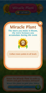 Miracle Plant flower bloom point