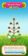 Miracle Plant water info