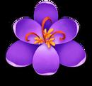 Flowerpurplebloom