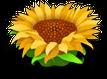 Floweryellow9
