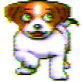 ZDog dog