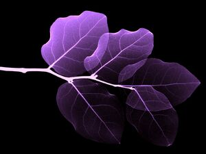 Vista-wallpaper-4-leaves.jpg