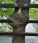 Treemaw
