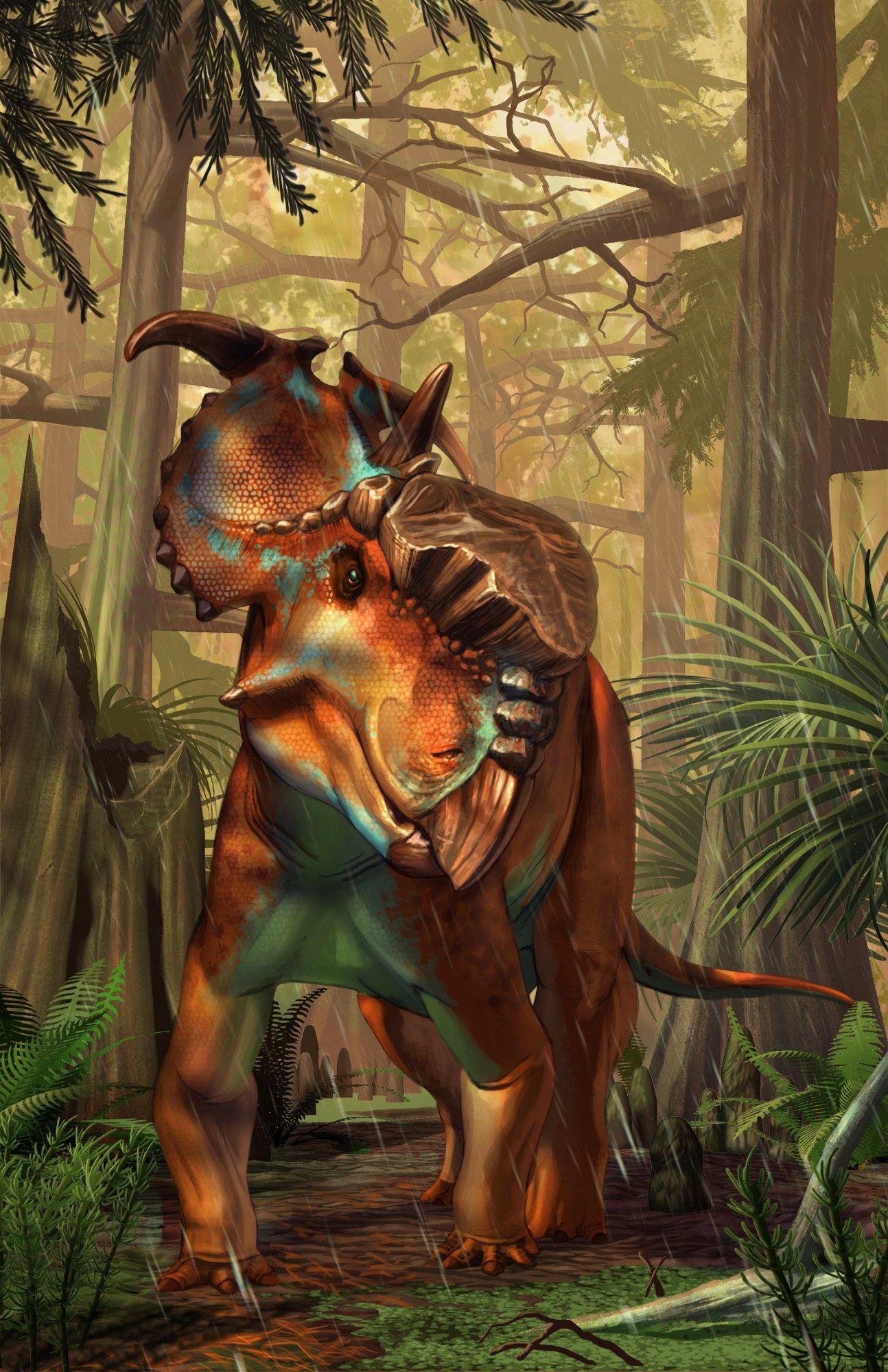 Pachyrhinosaurus Lakustai Beasts Of The Mesozoic Wiki Fandom