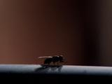 Fly (symbol)