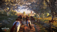 The Witcher 3 Wild Hunt Horse racing