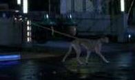 Automatic dog-walker