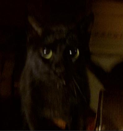 Catherine Madison's cat
