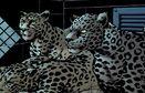 Dez and sisters jaguar
