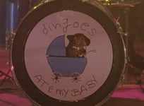 Dingoes Drum Kit