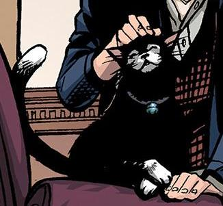 Alasdair Coames' cat