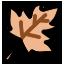Crunchy Leaf