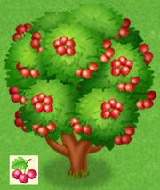 Azarole Baum.jpg