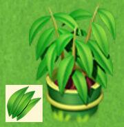 Grüntopf Bambuspflanze.jpg
