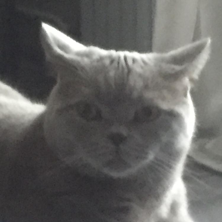 Laggref's avatar