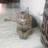 Abdus Sami Yousufi's avatar