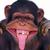Monkey2529