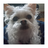 Bigrobotchickenfan16's avatar