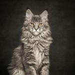 Etoile du Lynx