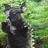 Bagoronalis8998's avatar