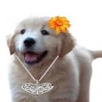 Eninka's avatar