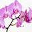 Wsamng2109's avatar