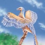 Aquila-br's avatar