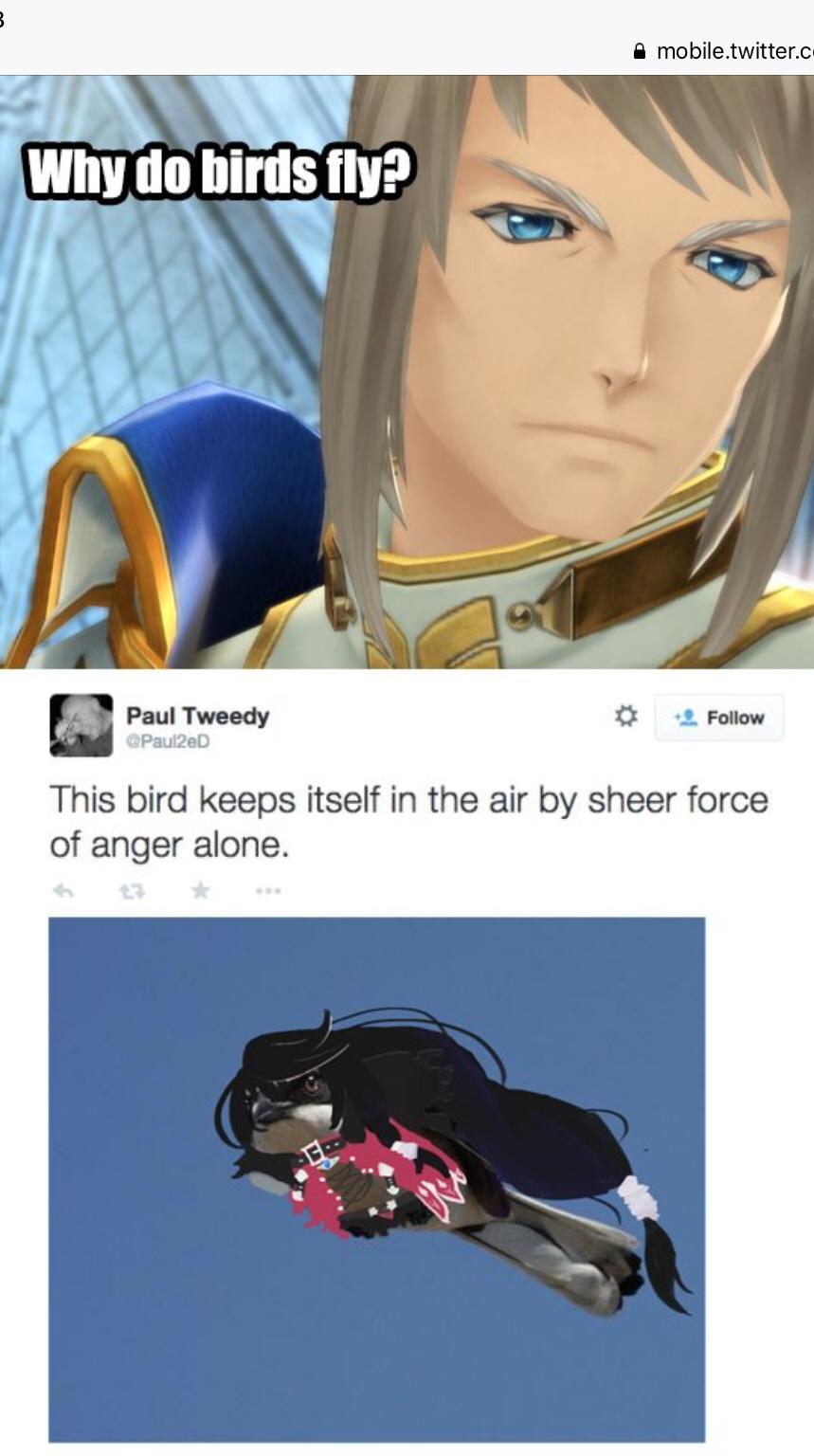 This bird needs some help killing someone.