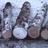 WinterZX07's avatar