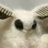 Shmittie San's avatar