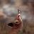Gizmo634's avatar