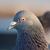 Птица Олег