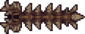 Dried Seeker