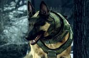 Собака Ghosts