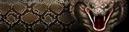 Viper-callsign