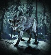 Wolf Skin Guard Dog CoDG
