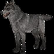 Wolf model 1 fur CoDG