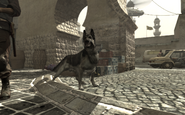 Dog in Coup