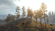 TorskBloc TreeHill Verdansk Warzone MW